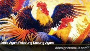 Jenis Ayam Petarung Sabung Ayam